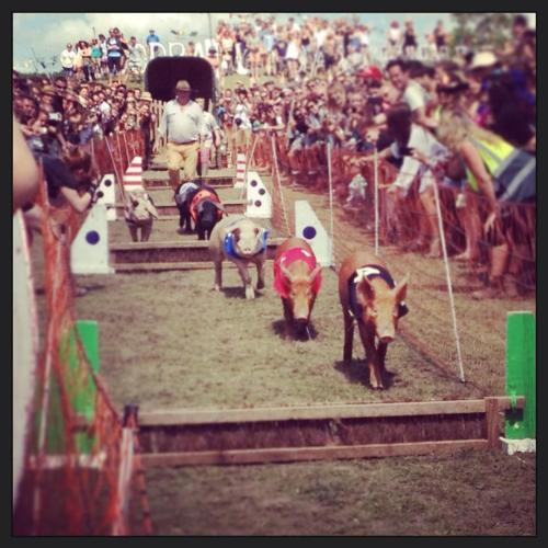 Pig racing - just one of the many crazy moments at Secret Garden Party